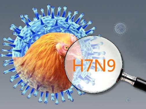 Triệu chứng và cách phòng chống bệnh cúm A/H7N9   VIAM